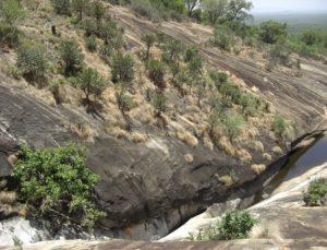 Euphorbia Forest Kazigau